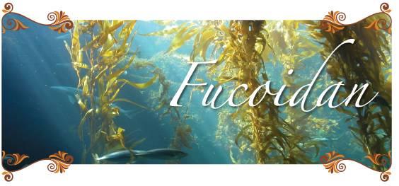 What is Fucoidan