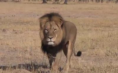 Shut Down Bushman Safaris Zimbabwe