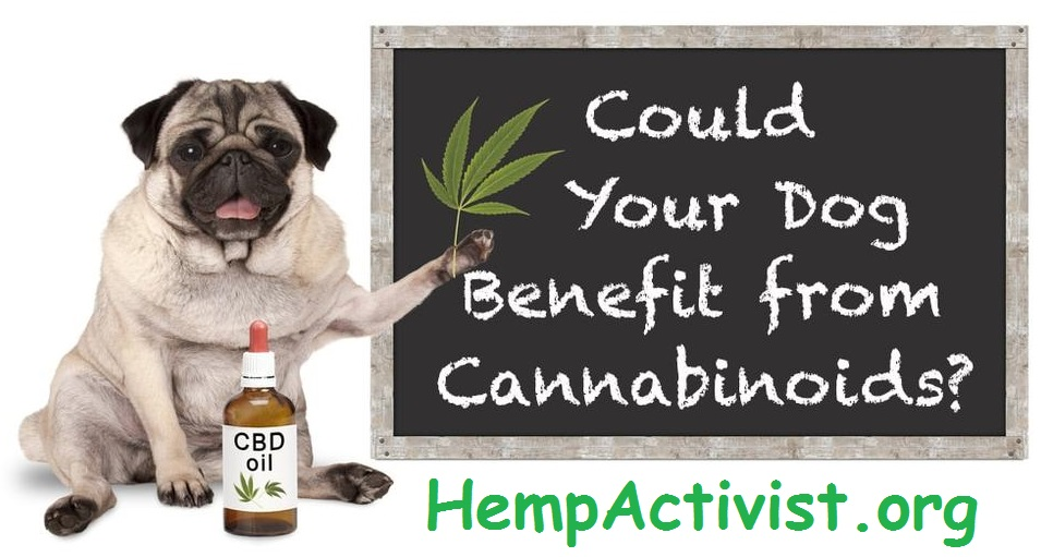 Hempworx CBD Oil Dog Facts